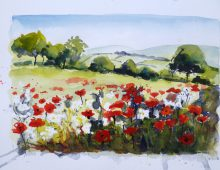 Poppies Sketch Oxfordshire