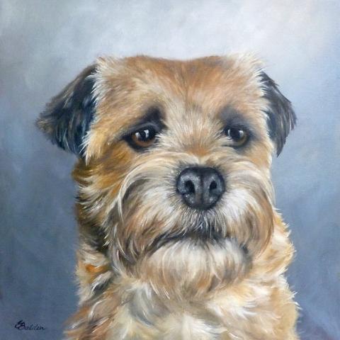Oil portrait of a Norfolk Terrier by Elizabeth Baldin