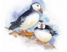 Puffins on Skomer (Ltd Edition Print) £35